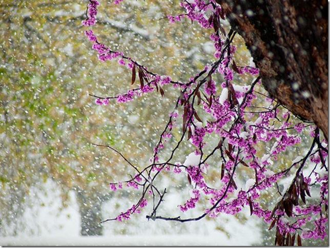 snow flower 2