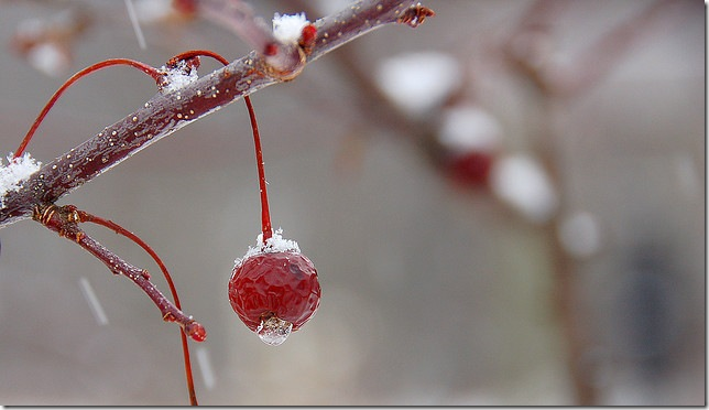 jeweled crabapple by paul moody via flickr