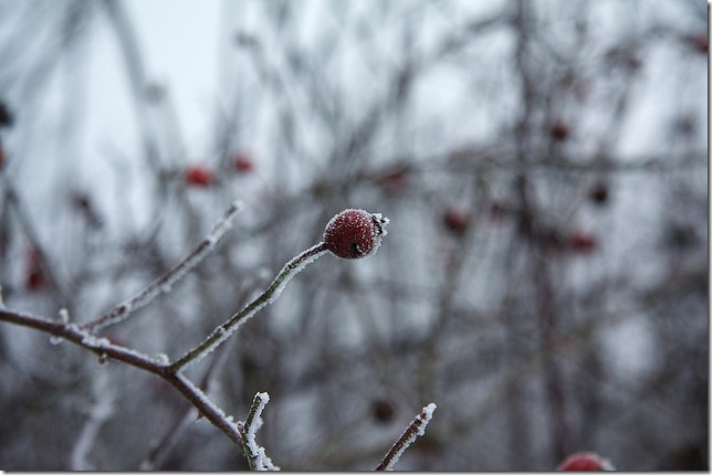 winter fruits by Kuba Bogaczewicz via flickr