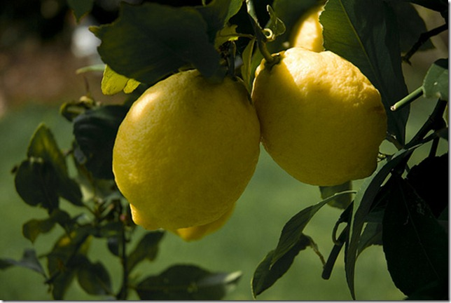 Tonys Fruit Trees by proper dave via Flickr