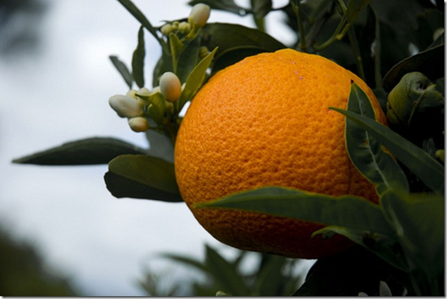 Tony's Fruit Trees by proper dave via Flickr