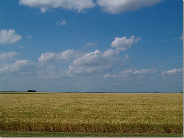 a wheat field in Oklahoma by JoeBurden via Flickr