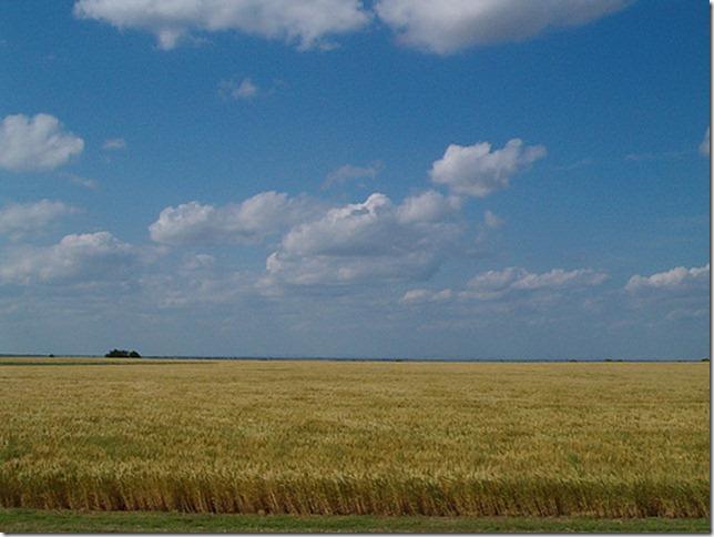 a wheat field in Oklahoma by JoeBurden via Flickr