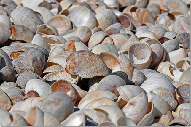shells on the sea shore by Dennis via flickr