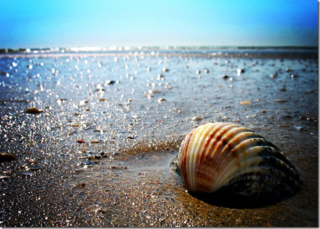 Sea Shell on the Shore by p!o via flickr