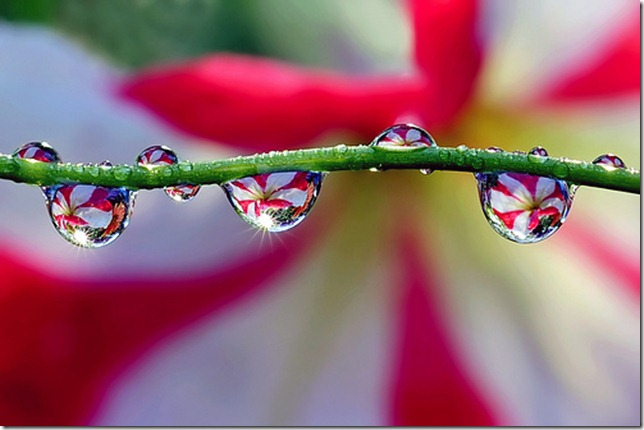 water drops with sunshine by Steve took it via flickr