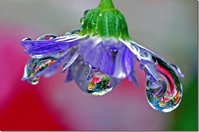 Chihuli blown glass chandelier by steve took it via flickr